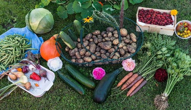 Gartenarbeit im Seniorenheim - Nutzgarten mit Obst und Gemüse im Seniorenheim zur Beschäftigung von älteren Menschen im Altenheim und Seniorenheim