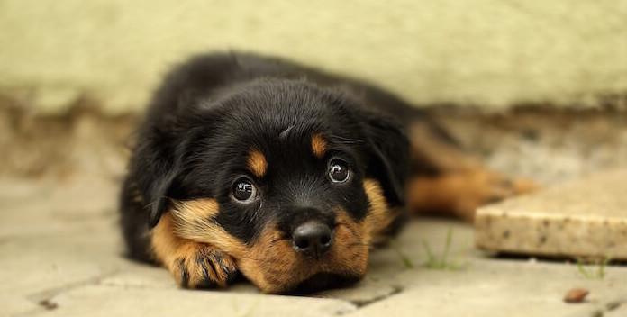 Senioren Leben - Hundewelpen ja oder nein