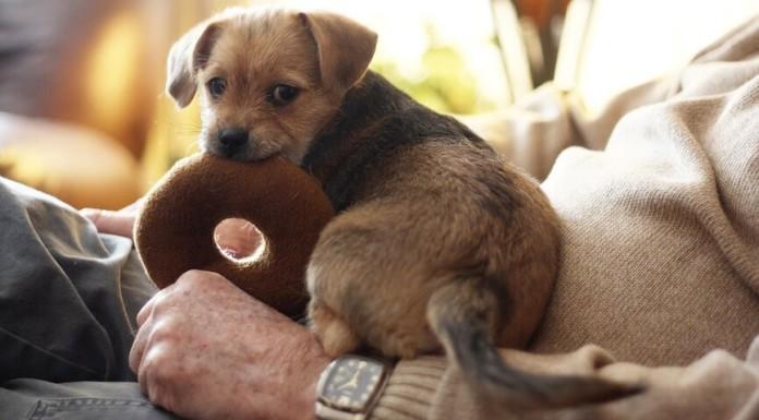 Erstausstattung Hundewelpen - Ausstattung für Hunde Welpen