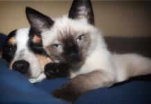 Haustiere für Senioren und Rentner - Hunde Katze Vogel oder Fische