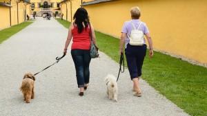 Hundebesitzer knüpfen schneller neue Kontakte - Senioren und Rentner