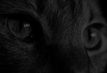 Katze als Haustier für Senioren und Rentner - Das Tier das Miau macht maunzt und auf die Jagd geht für ältere Menschen auf dem Prüfstand