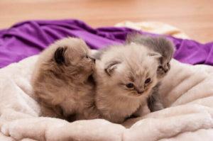 Katzenbaby für Senioren - Das richtige Alter für die Abgabe von Katzenbabys