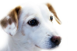 Senioren Rentner Haustiere - Hund