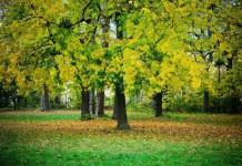 Senioren und Rentner - Gartenarbeiten im Herbst - anfallende Arbeiten im Garten im Herbst