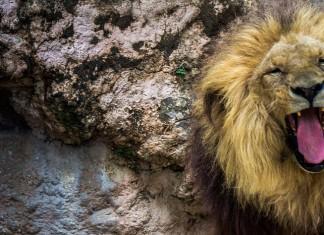 Zoo Barcelona - Zoo und Tierparks - Rentner und Senioren Ausflug